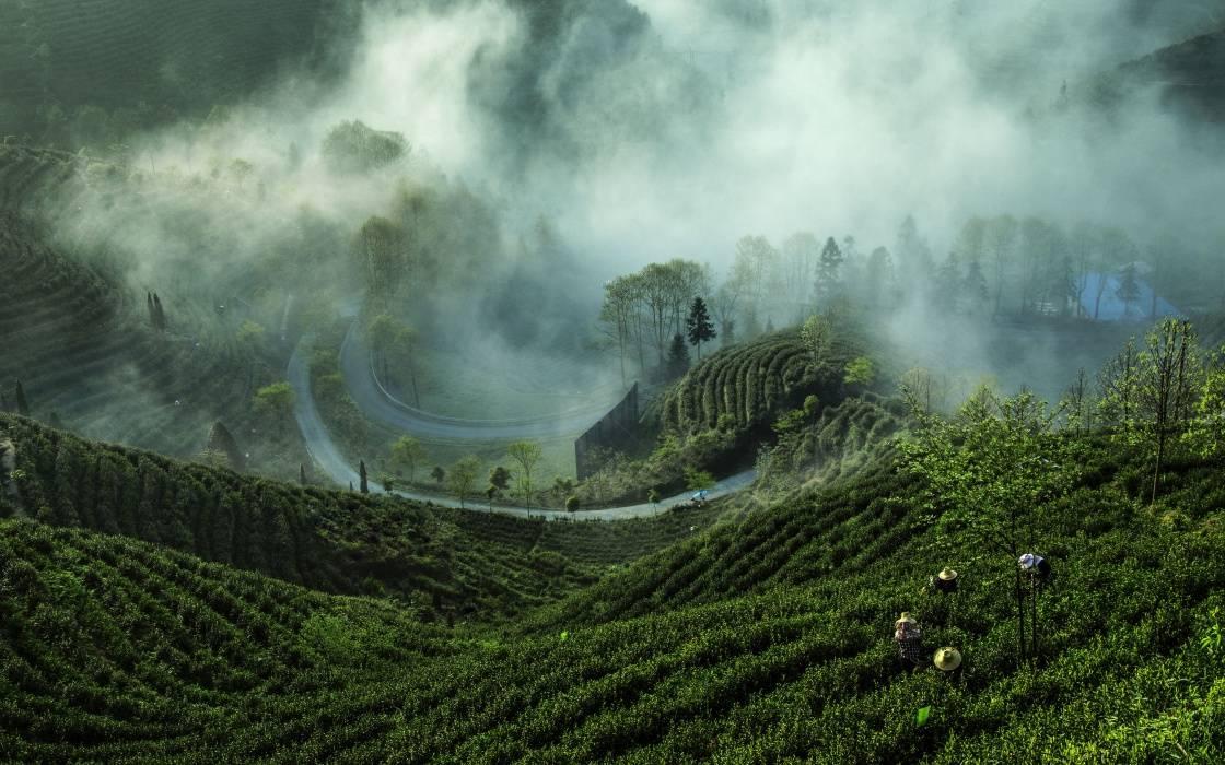 Čaj, láska a svět